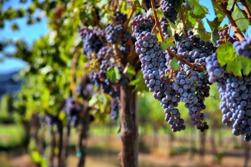 druiven.jpg