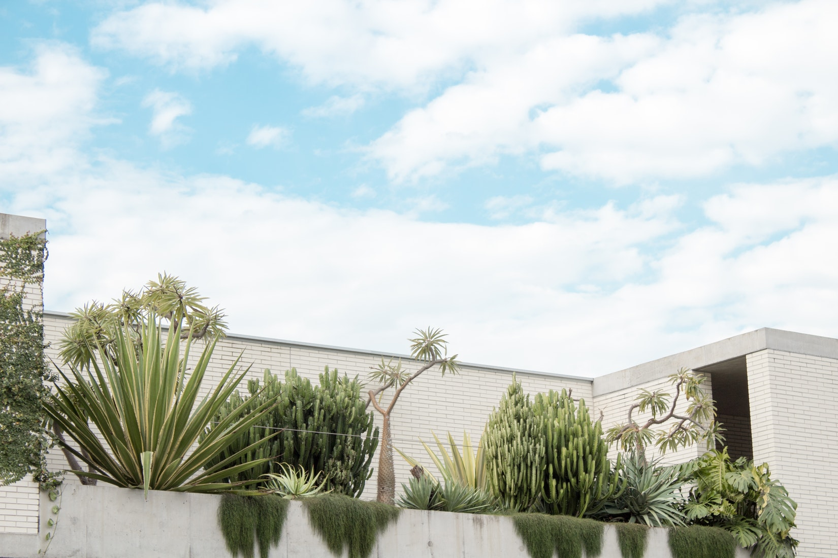 Afbeelding van groen dak